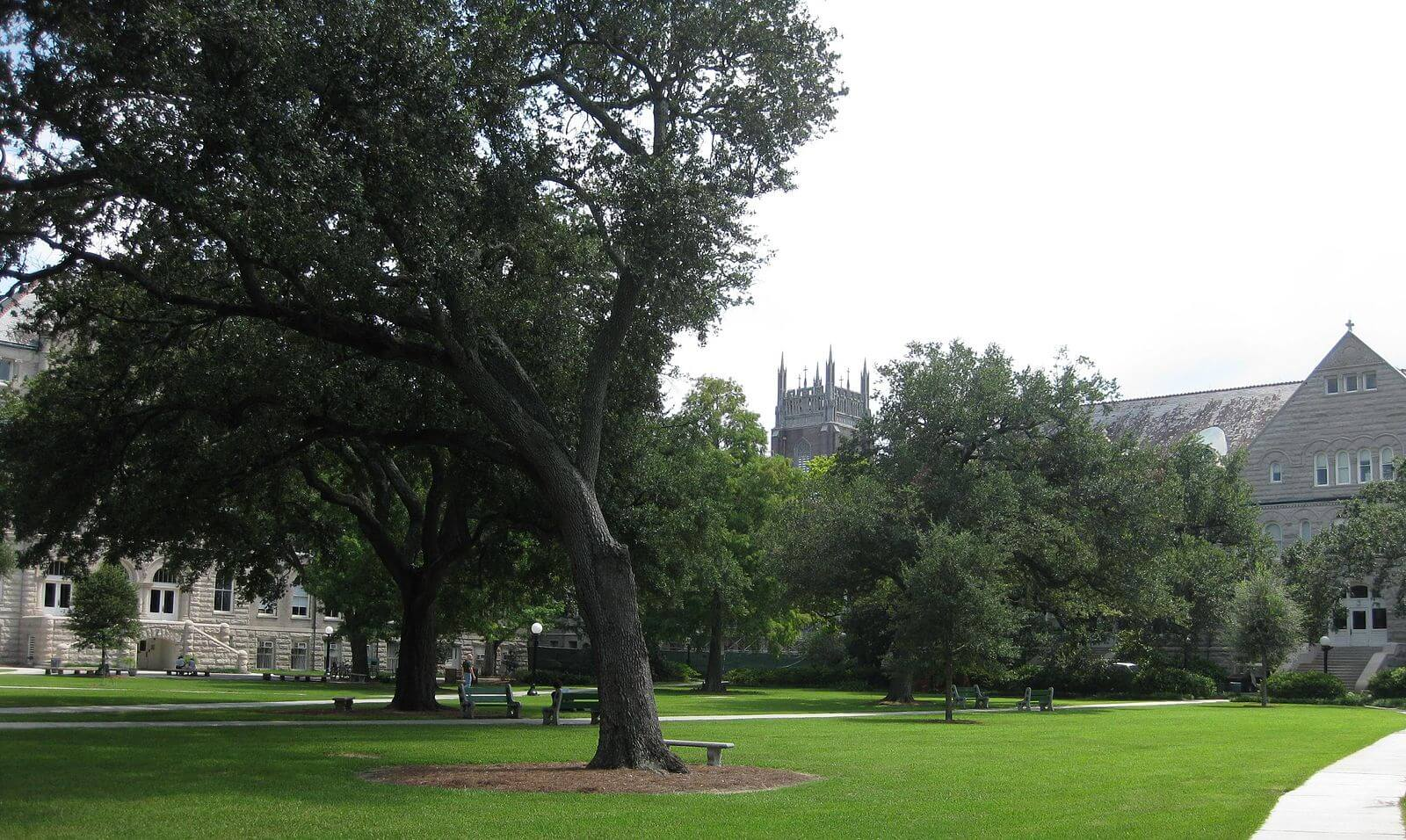 Tulane Merit Scholarships